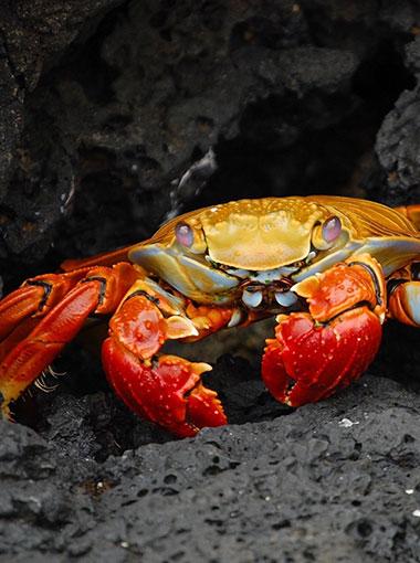 Crabyon